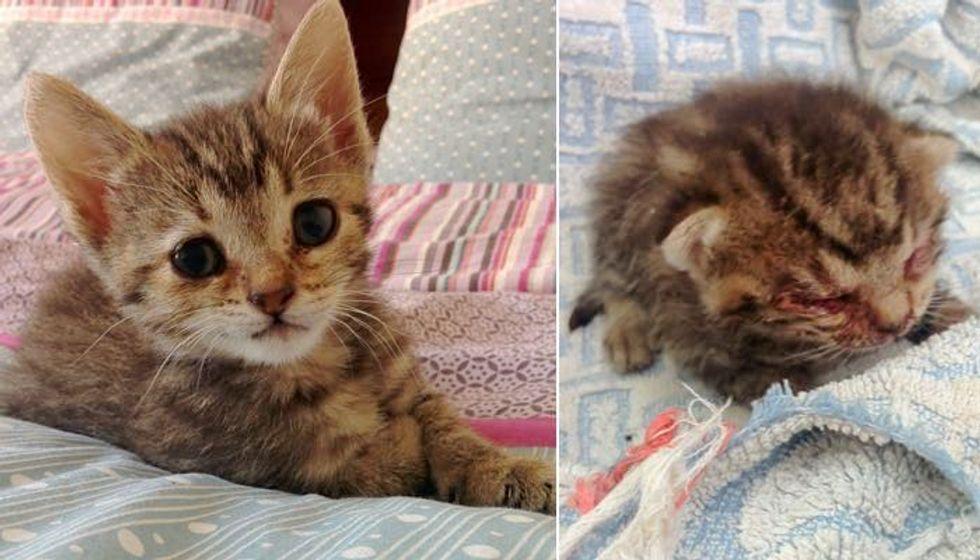 Lifeless Kitten Found on Doorstep Turned Around by Love