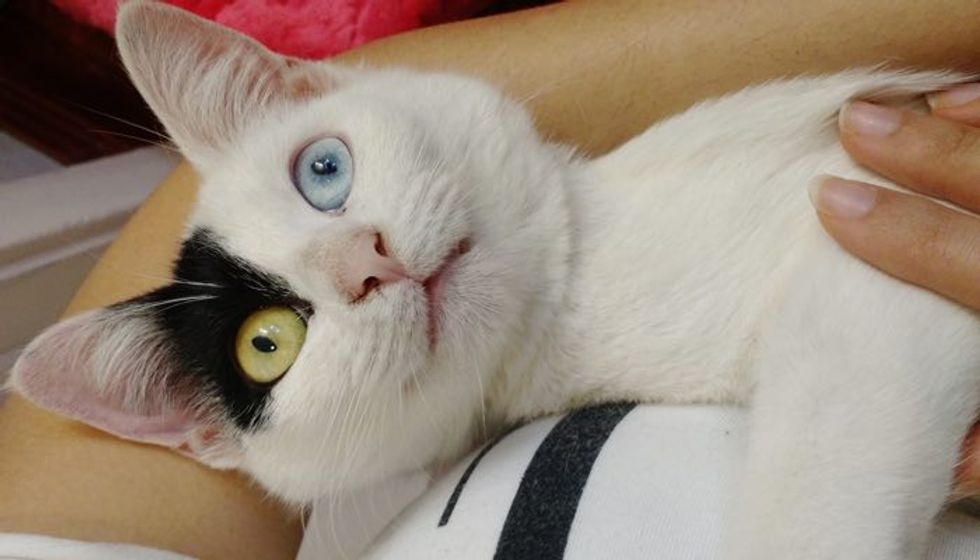 Shelter Cat Sits in Her Human's Arms Wanting to Be Adopted