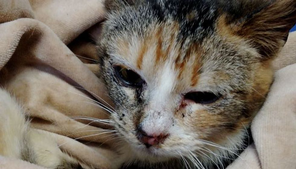 Courageous Woman Raced into Oncoming Snowplow to Save Kitten