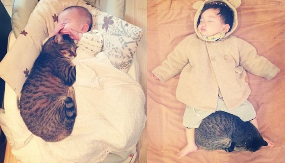 Tabby Cat and His Baby Brother Growing Up Together! (10+ photos)