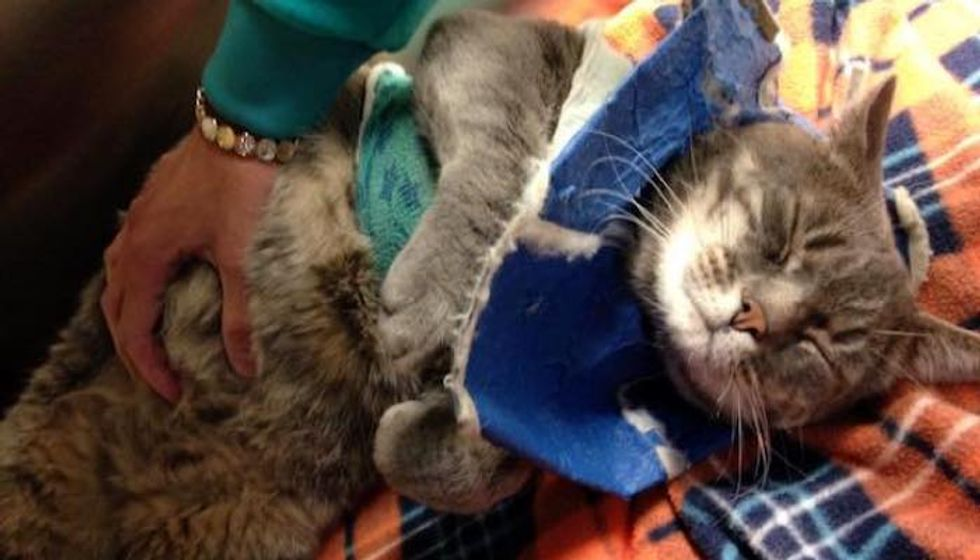 """""""Ferocious Feral"""" who Surviveda Year Tangled Up Surprises Rescuers with His Change"""