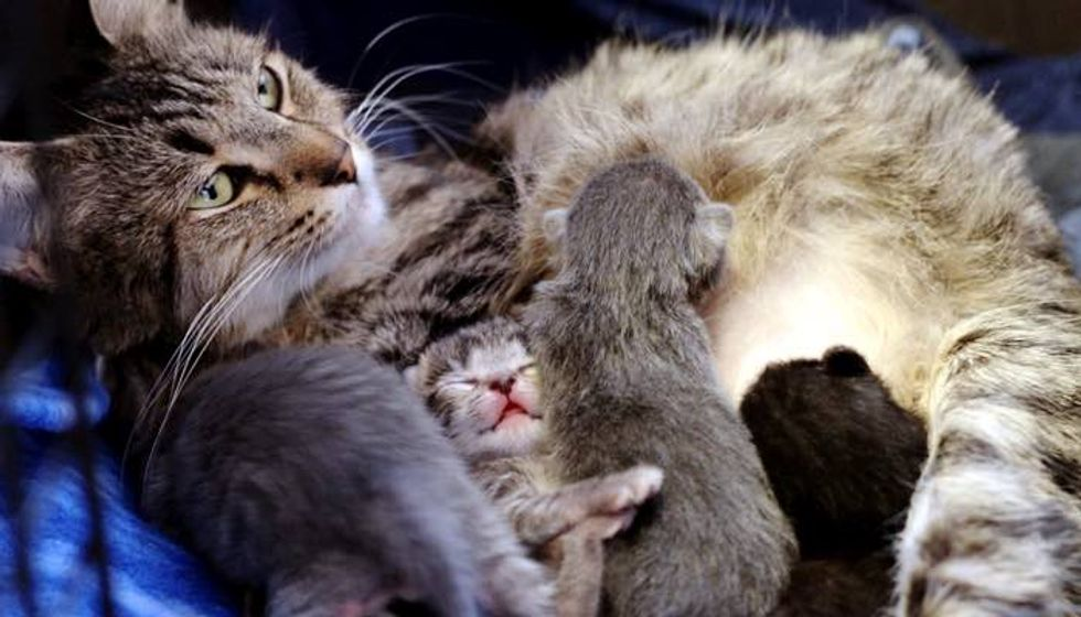 Pregnant Stray Cat Saved Just In Time for Her Babies