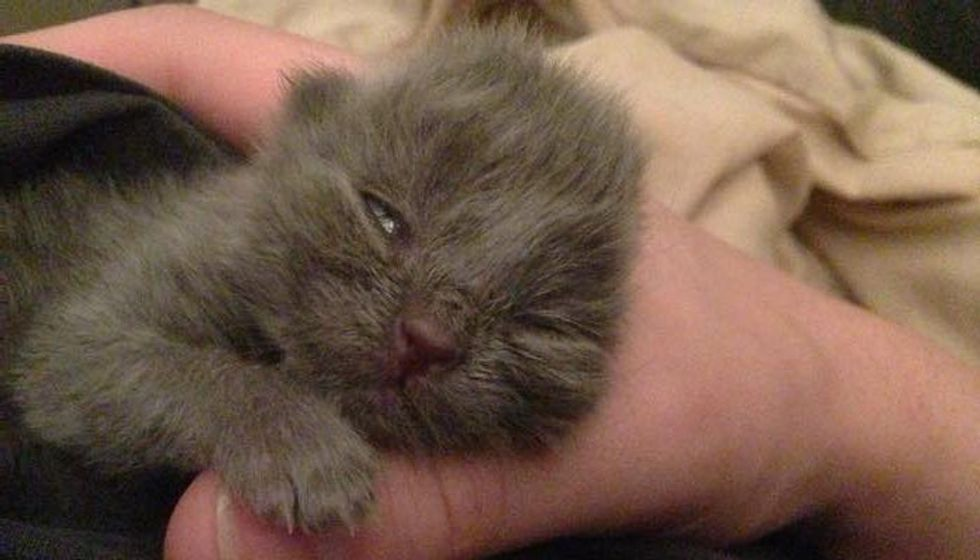 Tiny Orphaned Kitten Found in Backyard Now Happy and Loved!