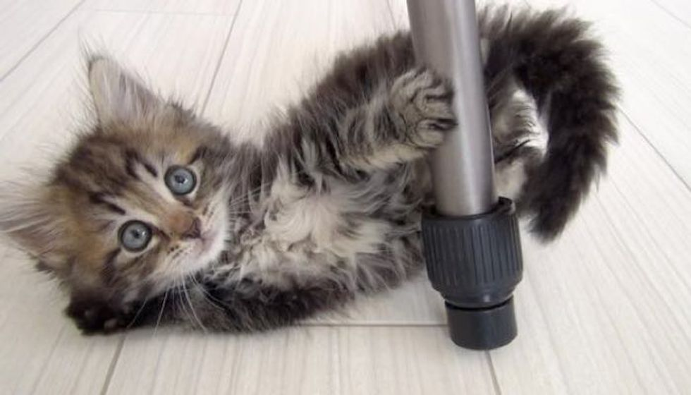 Kitty Surprises His Humans How Much He Fluffed Up in Just Half a Year!