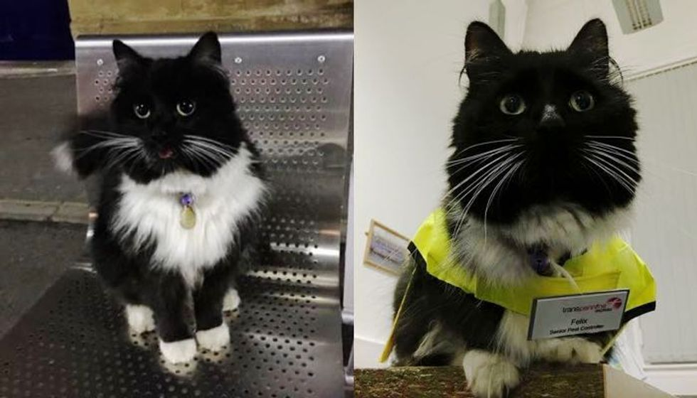 After Five Years of Service, this Kitty Got a Much Deserved Promotion