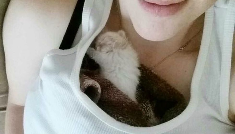 Tiny Kitten Abandoned at Grocery Store Finds Woman He Loves and Won't Let Go, Now Months Later.