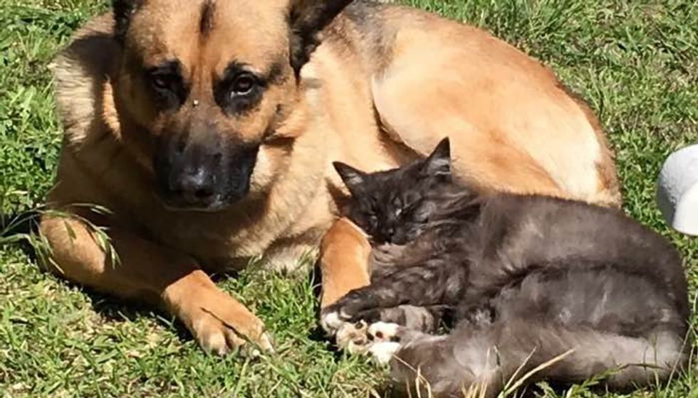 Shelter Cat and Dog were Looking for Homes, But They Found Each Other