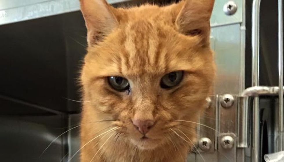10-year-old Cat Waiting for Someone to Save Him and Love Him