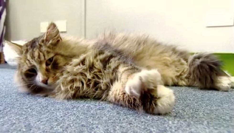 Missing Cat Surprised His Family After He was Found Bigger, Fluffier in a Pet Food Factory