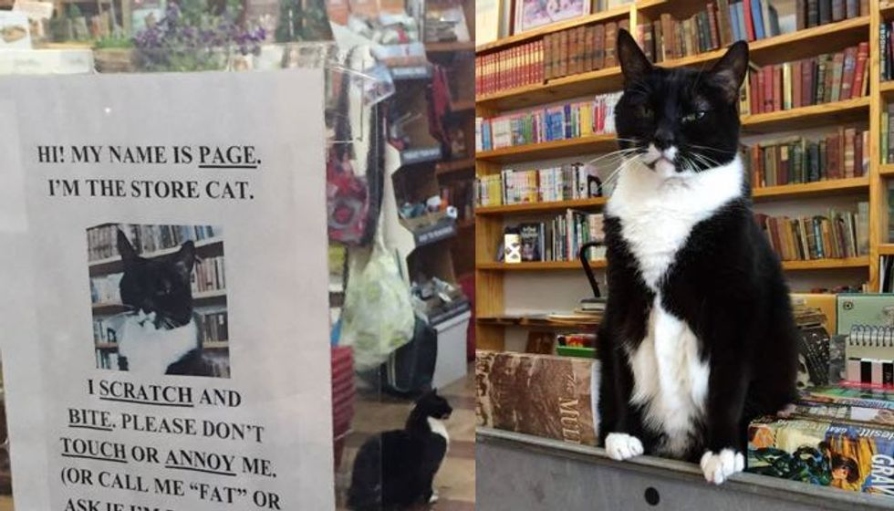 This Local Book Store Has a Cat with Some Serious Cattitude!