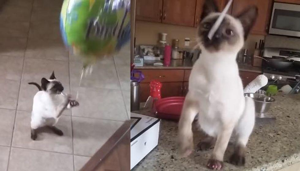 Kitty is Very Attached to Her Balloon. It's Her Baby!