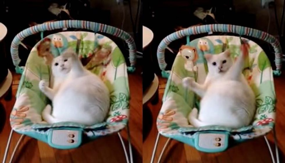 Cat Has More Fun with Baby Swing than Actual Baby