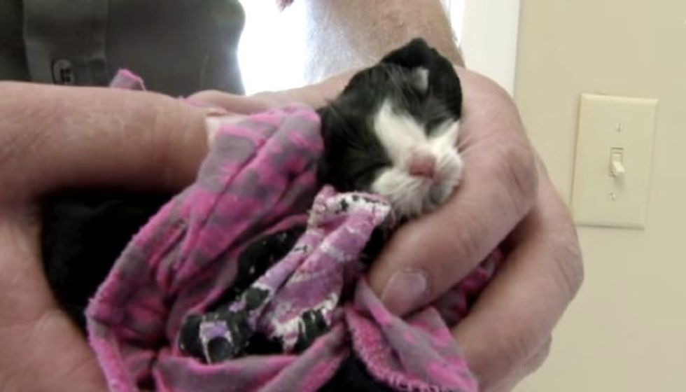Two Day Old Orphaned Kitten's Life Completely Changed in 16 Weeks