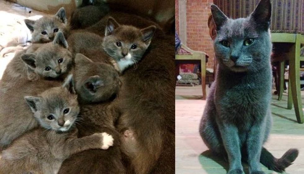 Family Saves Stray Cat from the Cold, She Brings Them a Gift 3 Weeks Later...