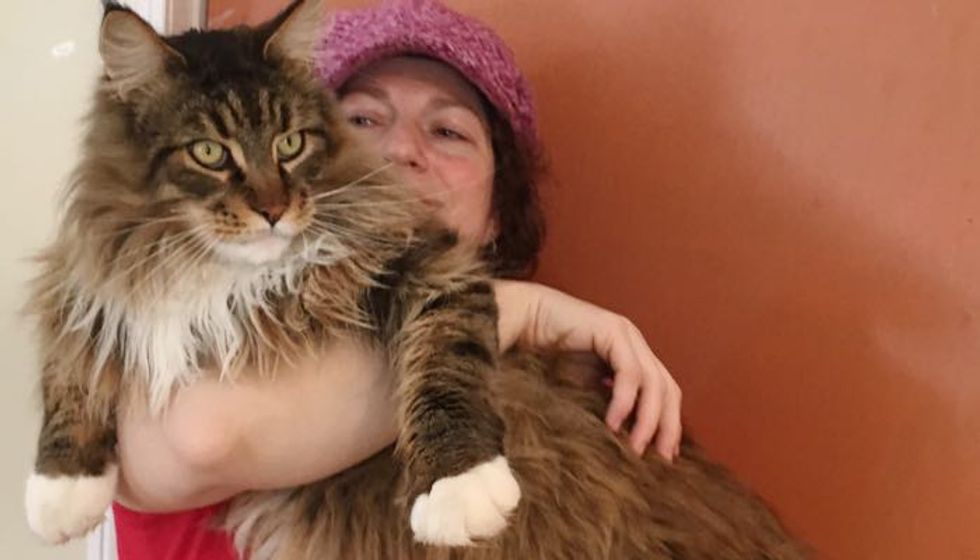 Maine Coon Cat Decides to Sleep Over at Neighbor's When His Human Works at Night
