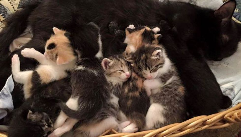 Cat Mama and Her Eight Babies Lost Their Home But Now Found Hope