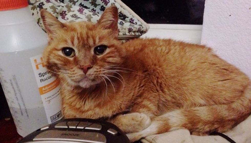 18 Year Old Garfield was Living the Shelter Life Until a Couple Came to Give Him a King's Life!