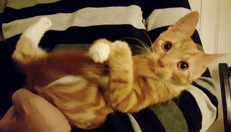 Tiny Kitten Uses His Tail as Pacifier. It Makes Him Happy!