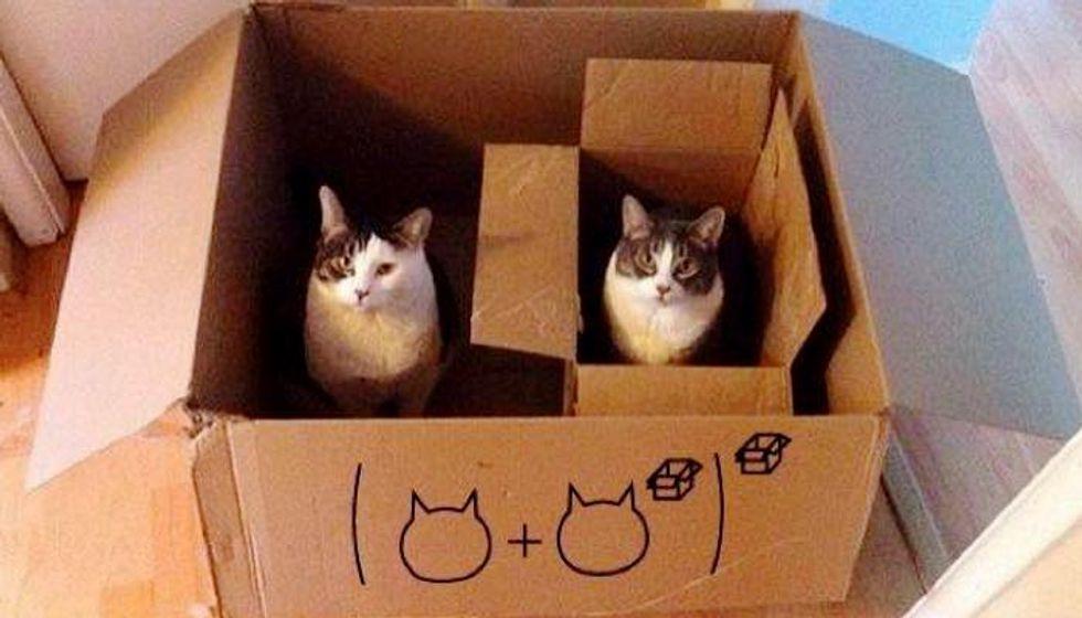 Cats Explain Mathematics in a Purrfect Way! (10+ pics)