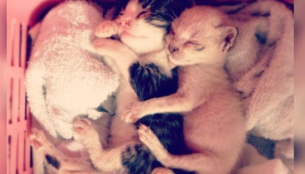 They were Cuddling When They were Rescued, Still Cuddle Today!