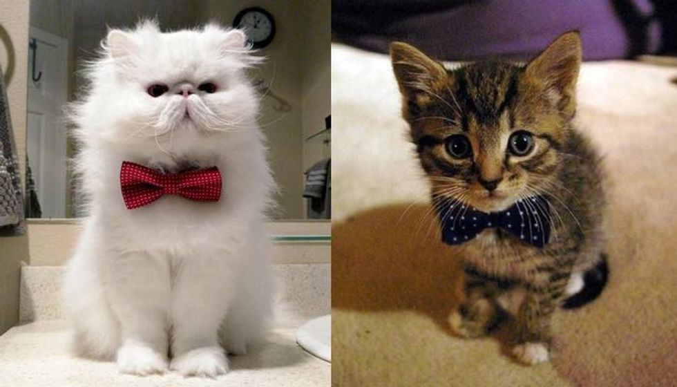 These 10+ Cats Want to Know If You Would Be Their Valentine!