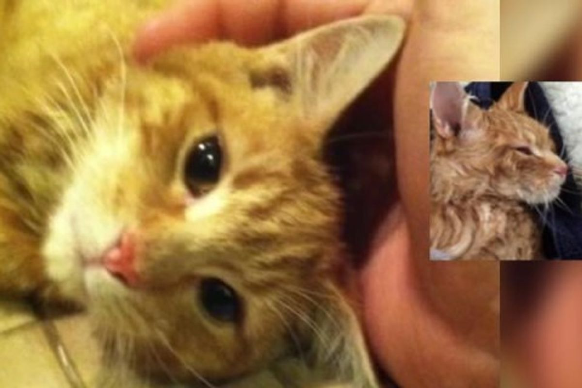 Man Brings Life Back to Ginger Cat Found Freezing in the Cold