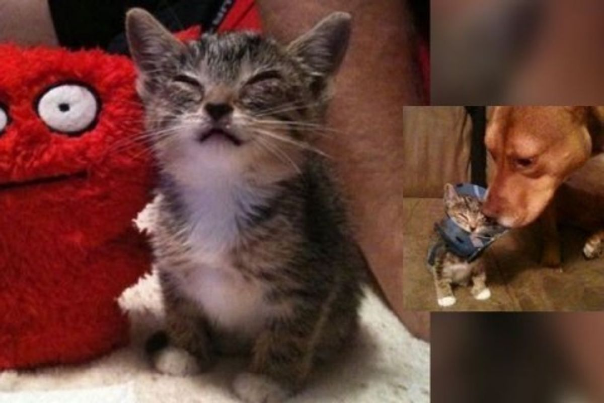 Family Saves Stray Kitten and Helps Her See Again!