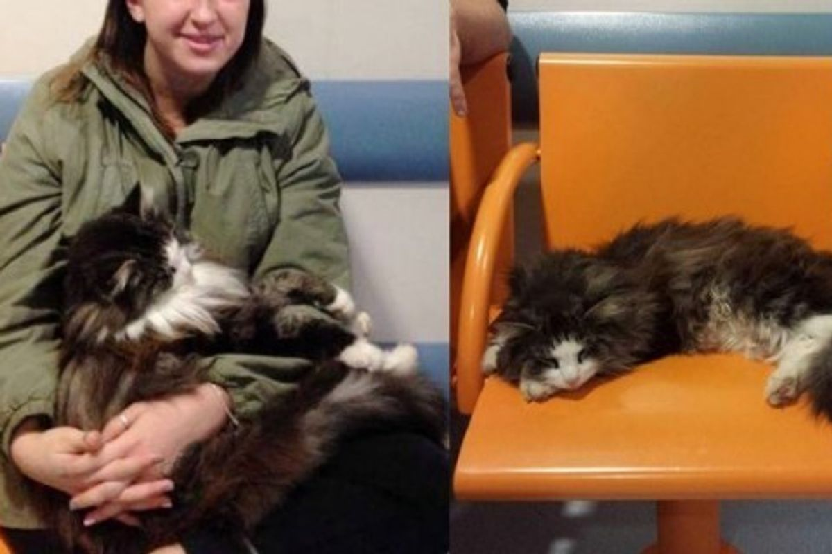 Fluffy Cat Shows Up at Hospital to Offer Patients Cuddles While They are Waiting to be Seen
