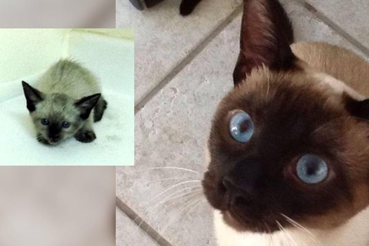 Kitten Found in Desert Surprises Her Rescuer How Far She Has Come
