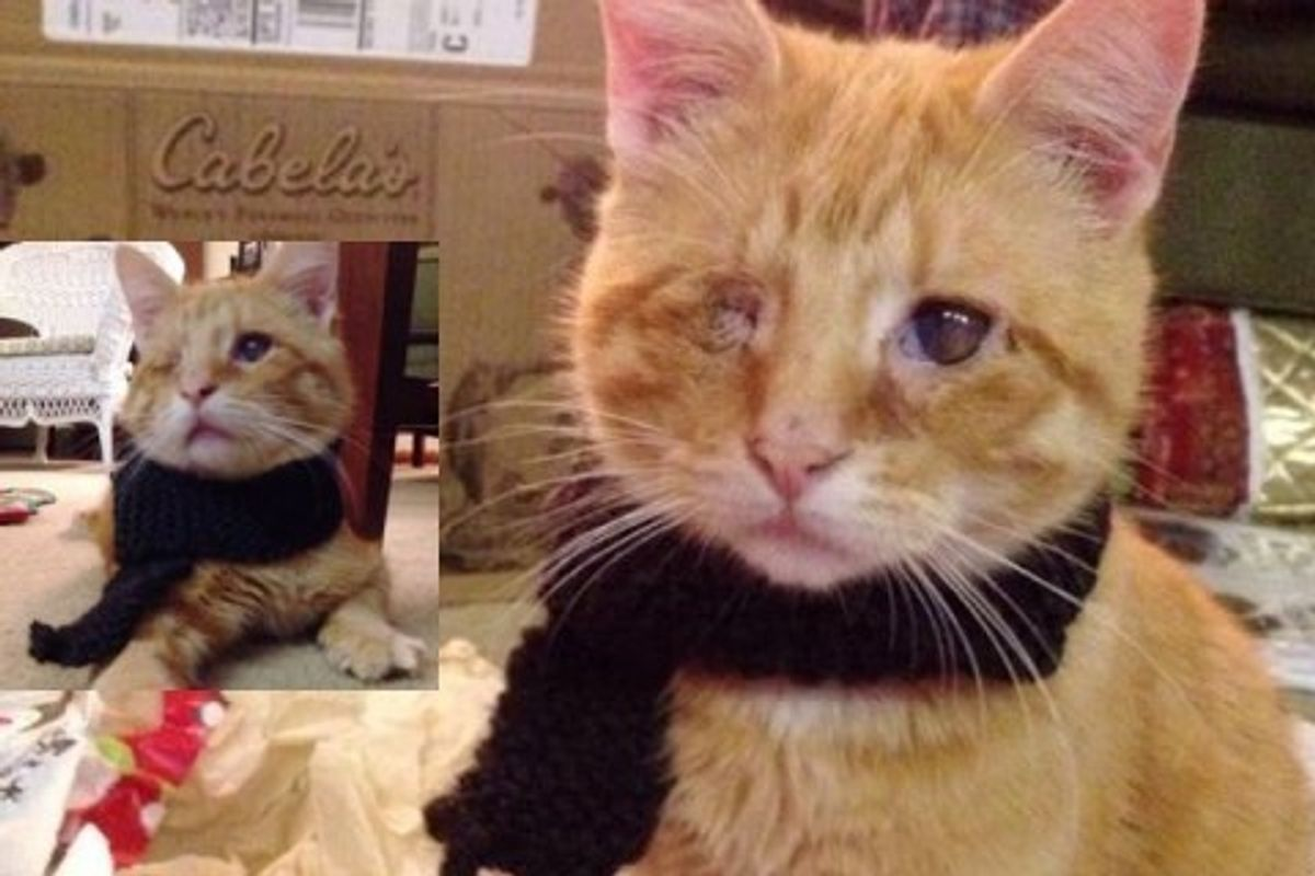 Blind Cat Saved from Roadside Finds Love and Warmth!