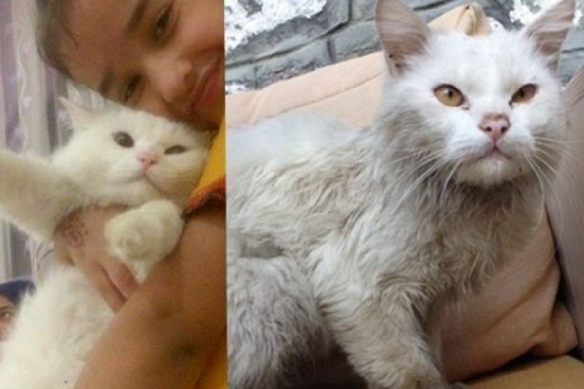 Refugee Cat Reunites with Family He Lost After 4 Months