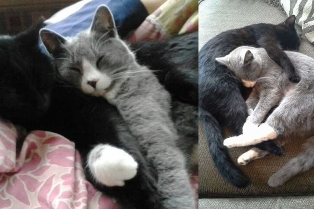 Two Adopted Kittens Haven't Stopped Cuddling Since the Day They Found Each Other