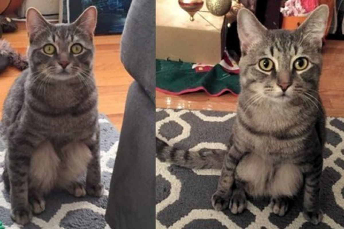 Couple Adopted a Stray Cat and Discovered His Little Quirk When He Sits