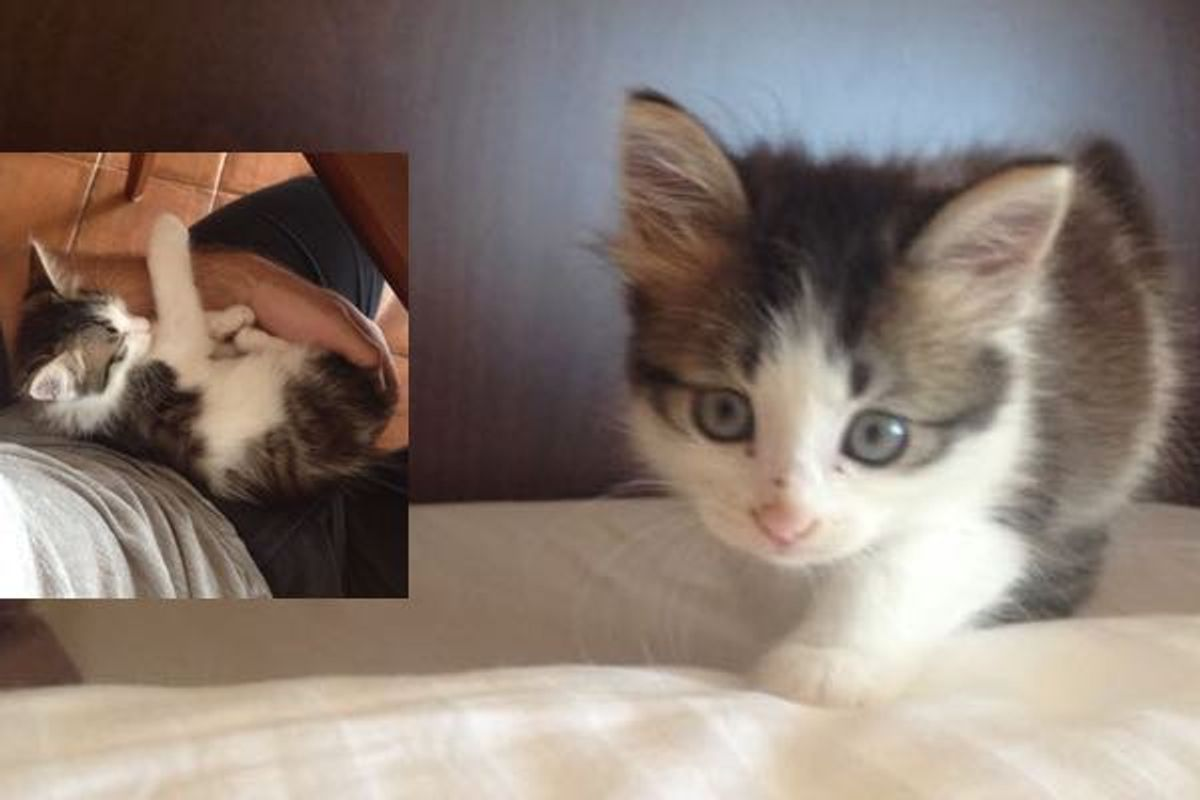 stray kitten shows up to guards then now