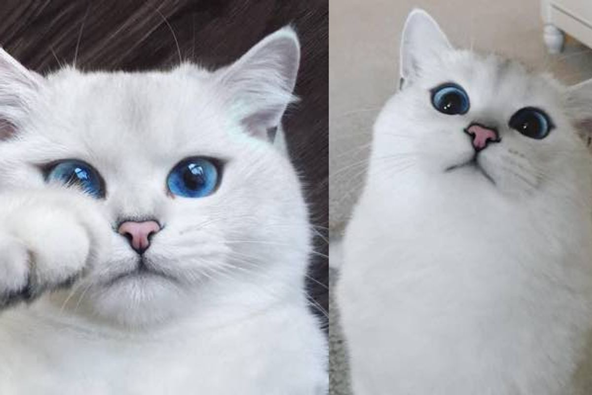 cat with the prettiest eyes