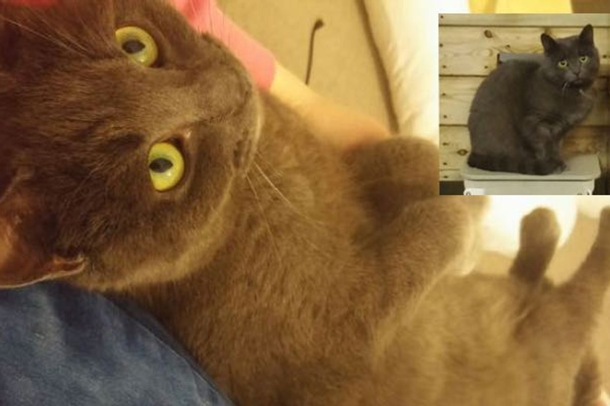 Difference a Loving Home Makes to a Shelter Cat