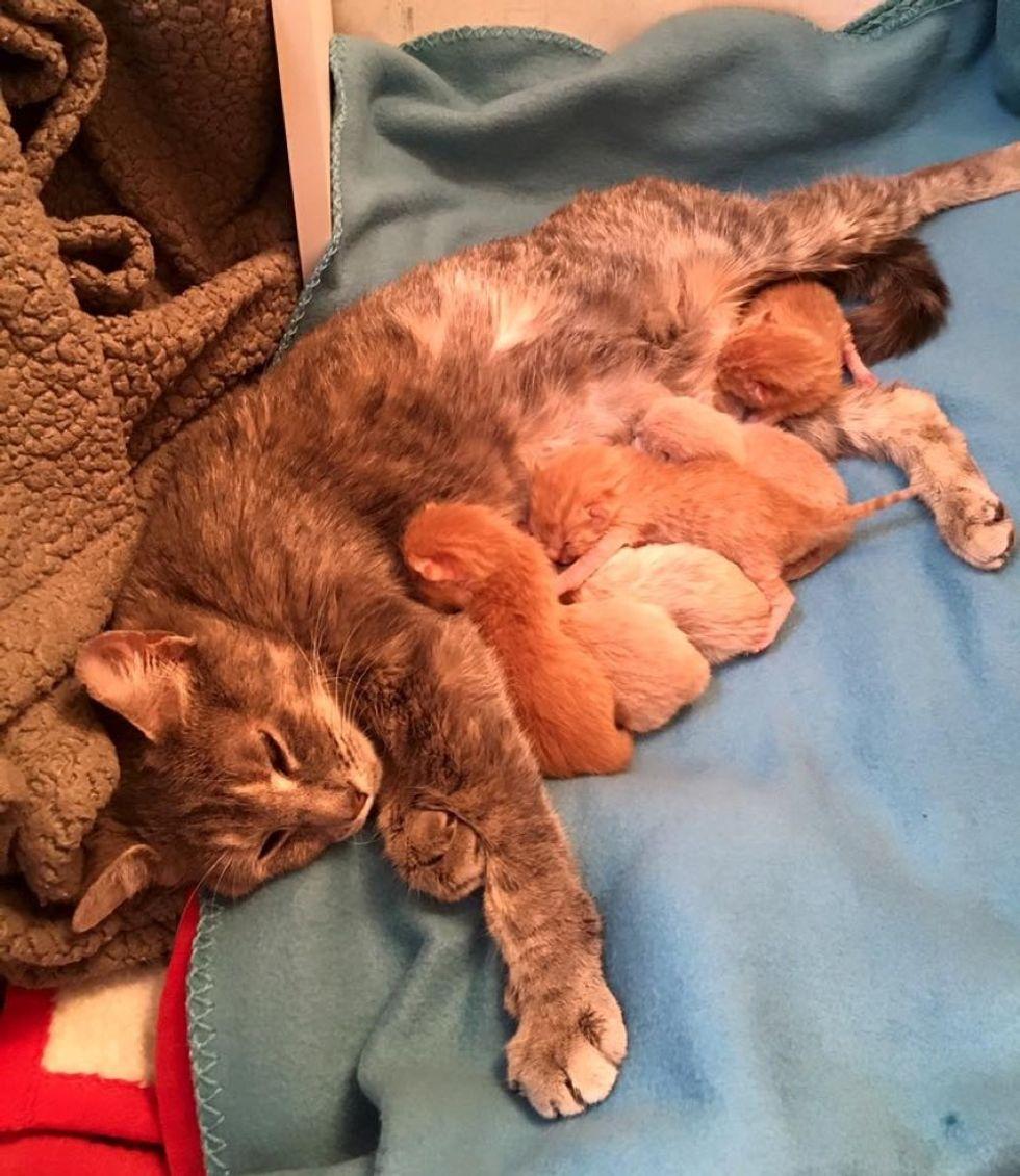 rescue stray cat mama 6 newborn kittens nursing