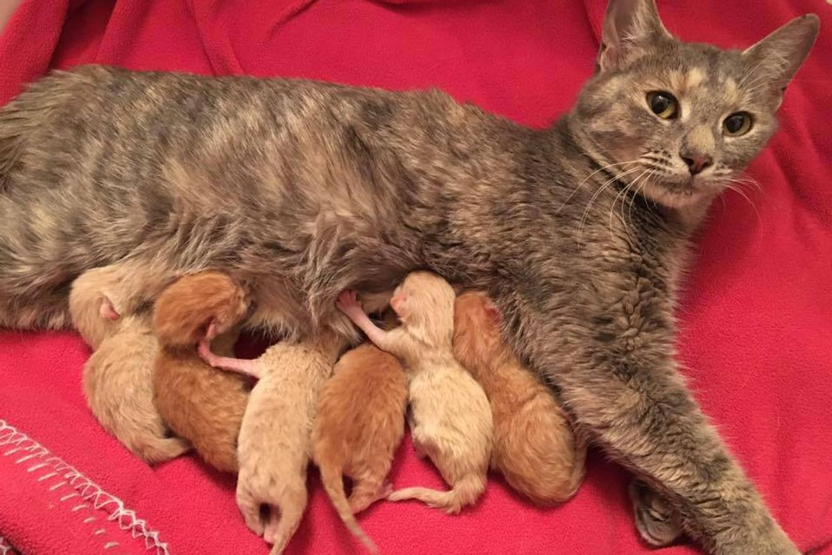stray cat mama 6 ginger kittens given second chance