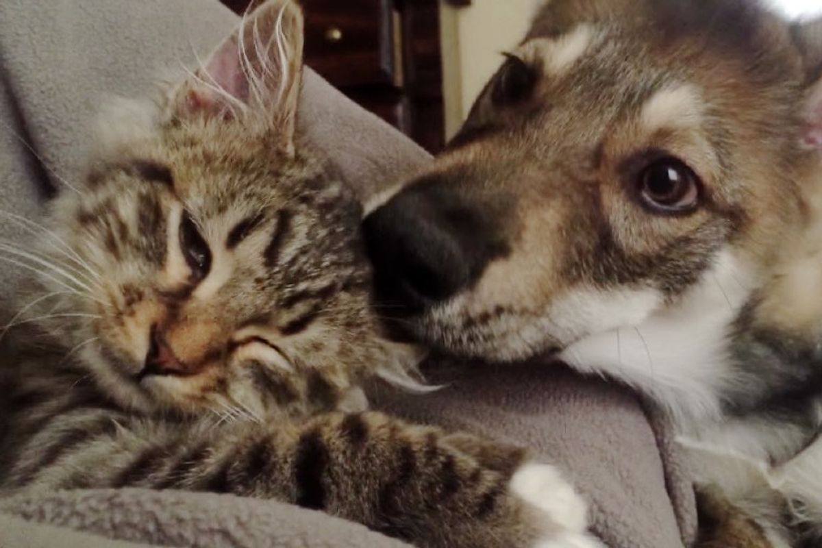 puppy adopted kitten from shelter inseparable friends