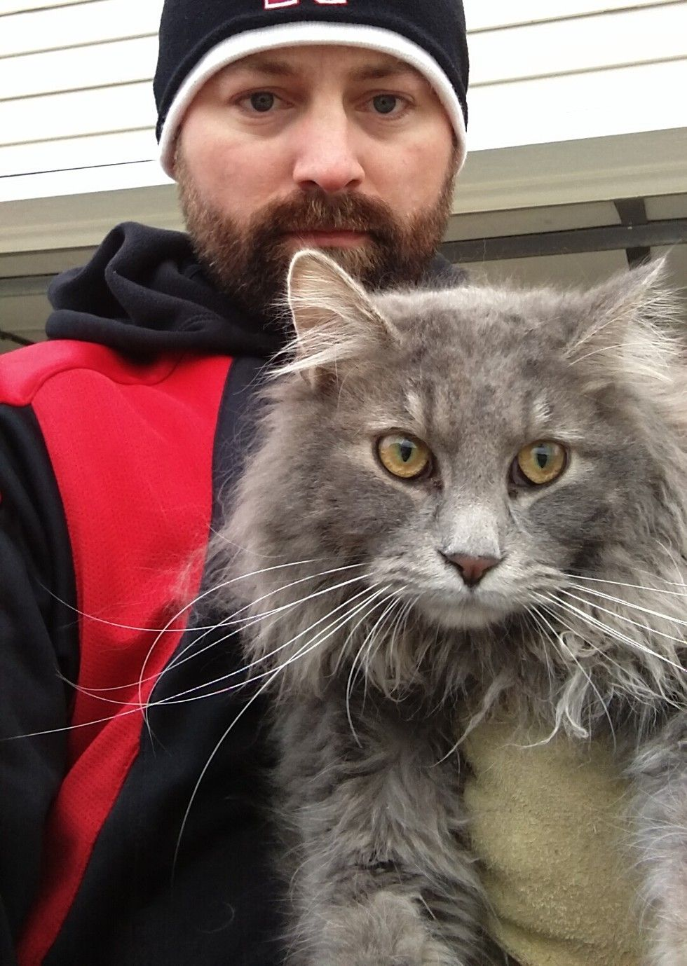 man saves cat from his car reunites him with family