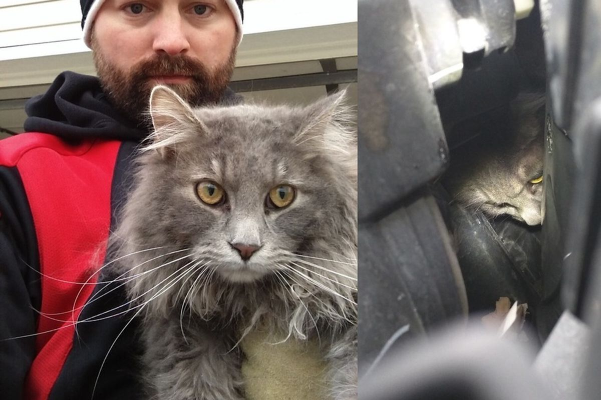 man saves cat trapped in car engined and reunites him with family