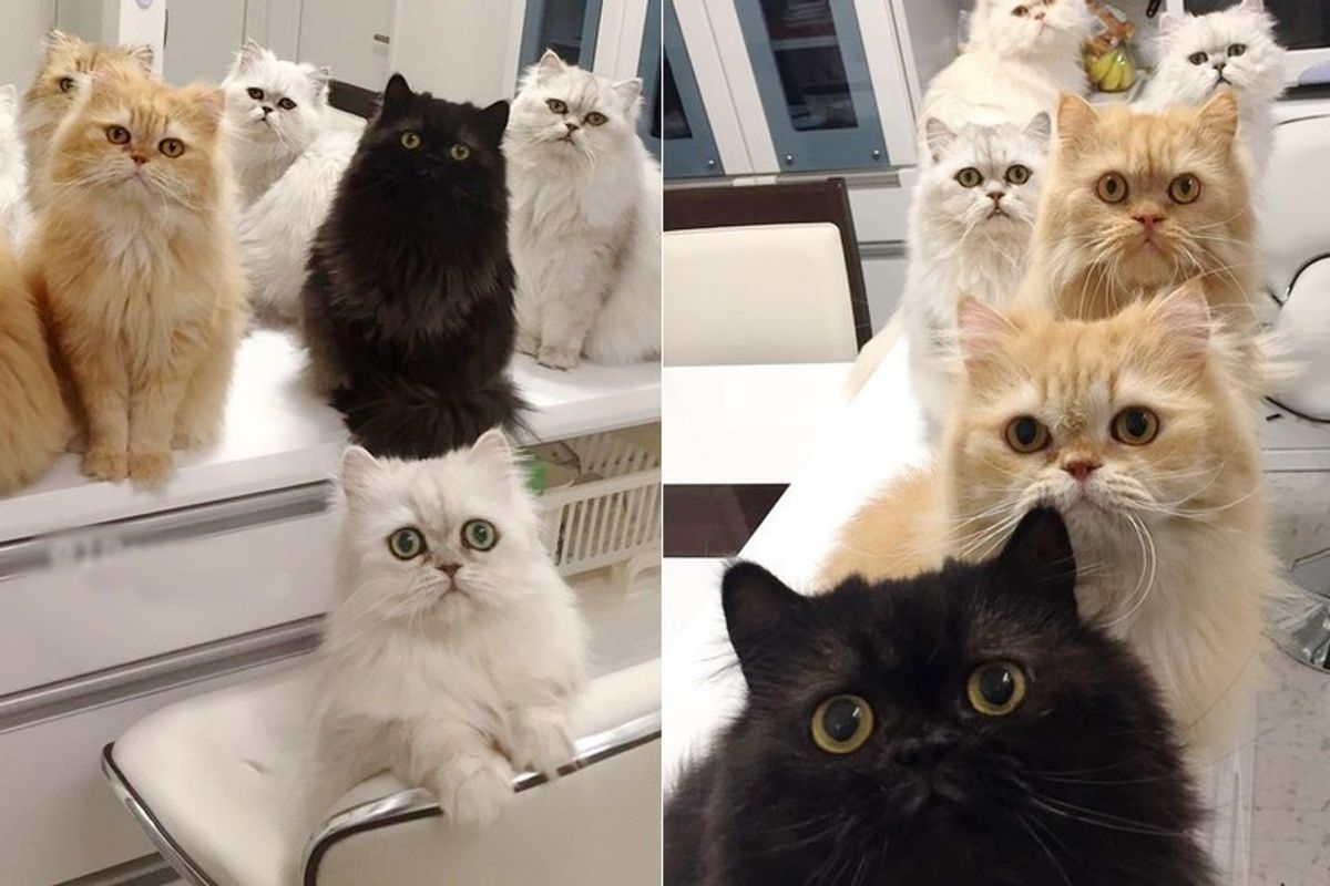 12 cats begging for food every meal time