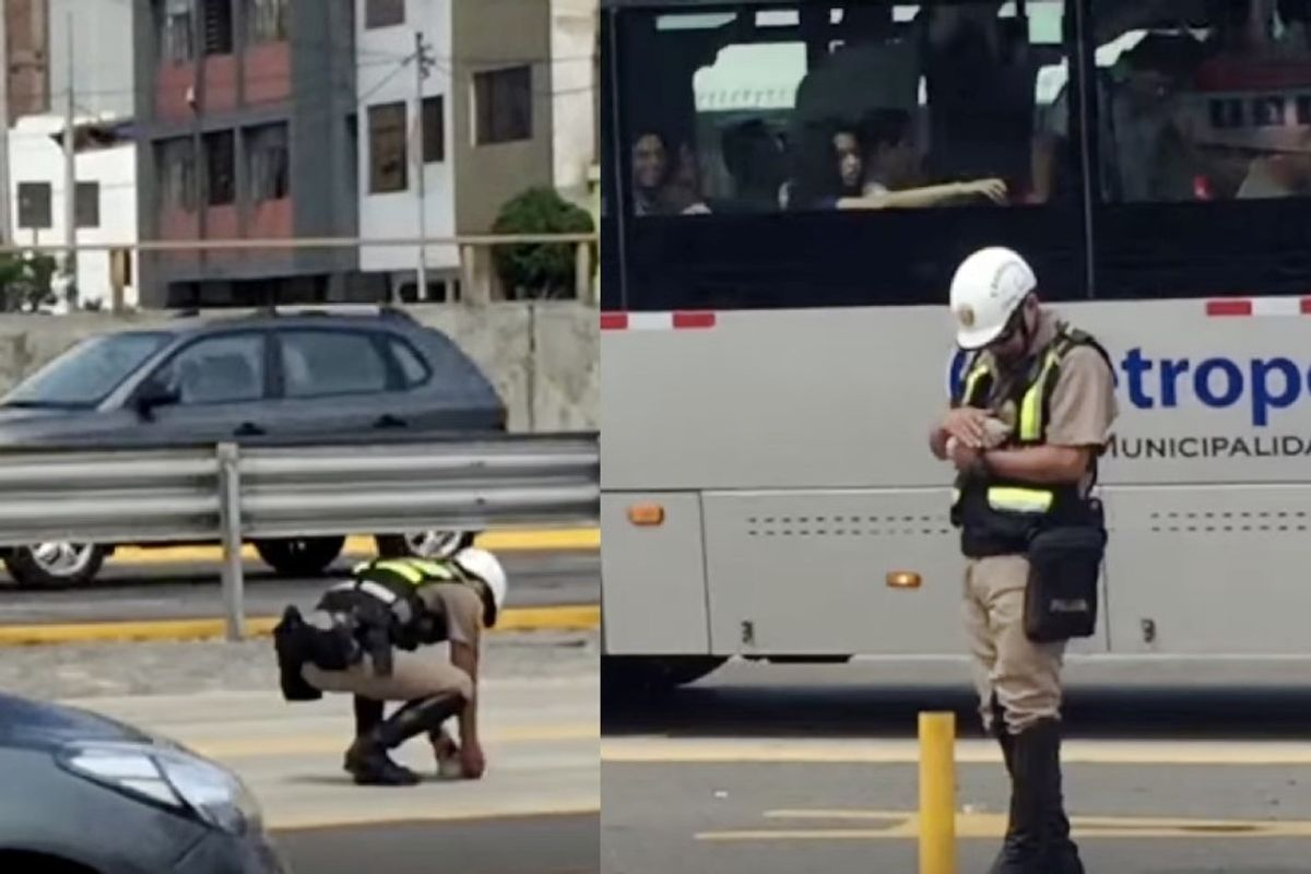 traffic police rescues kitten before run over by bus
