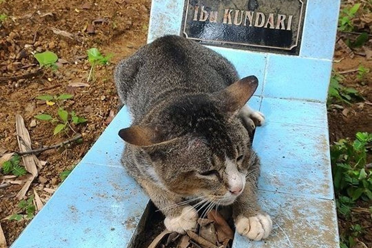 This handsome tabby guy rolling around on the graveyard