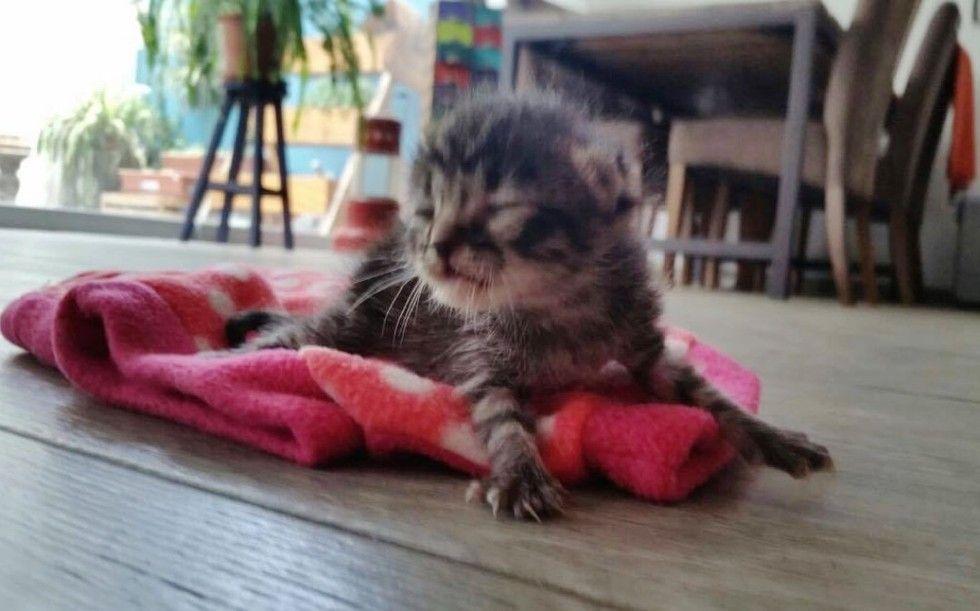 orphaned newborn kitten found on doorstep saved