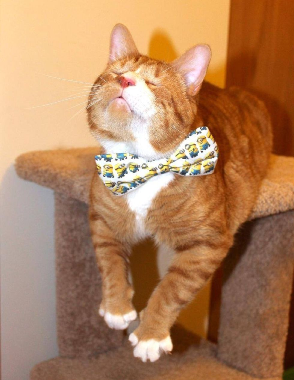 blind cat Magoo spent 2 years living on streets now living like a king
