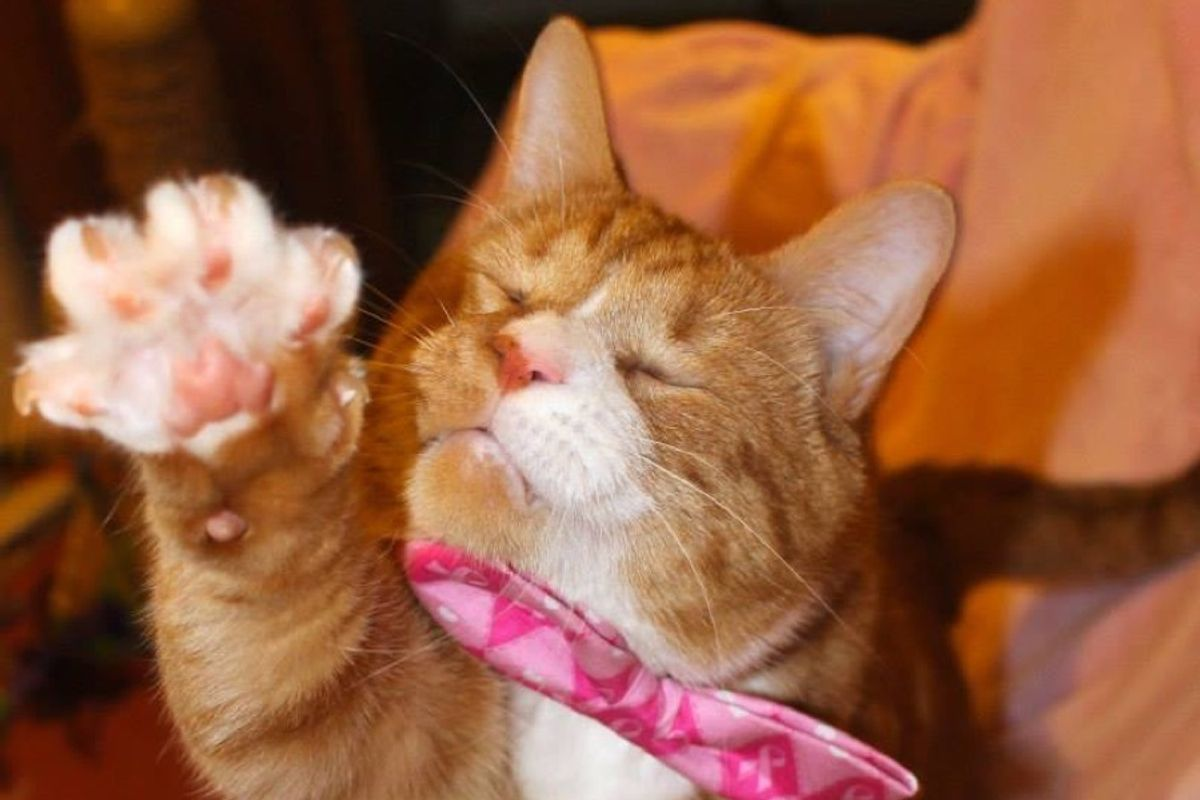 blind cat lived on streets for 2 years now living like king
