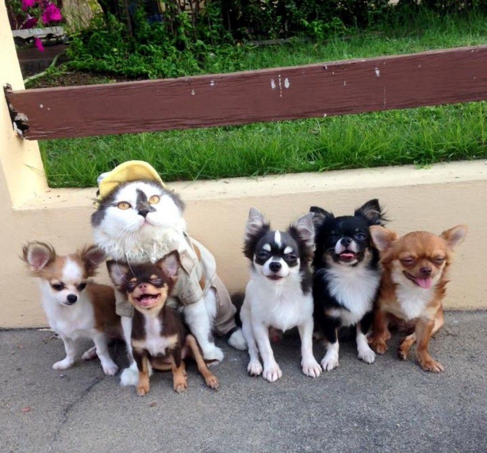 cat leads a pack of dogs and provides cuddles