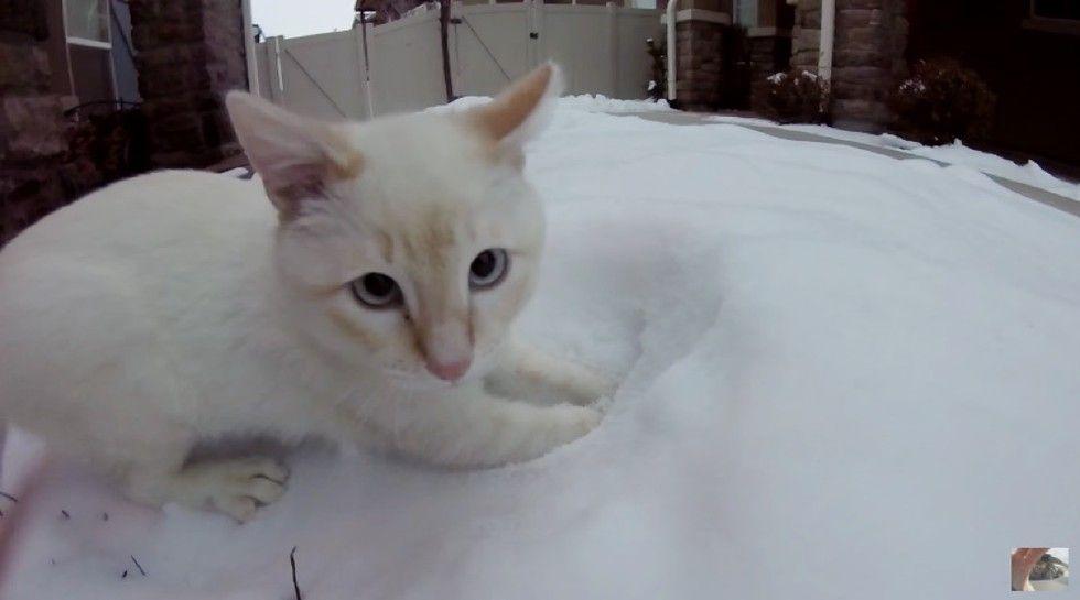 kitten found frozen in snow plays with snow