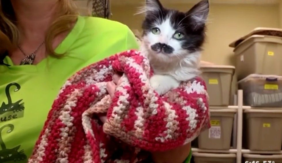 kitten with perfect mustache found at drop-box salvation army